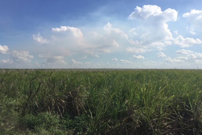 Oil drilling in Everglades inches closer to reality