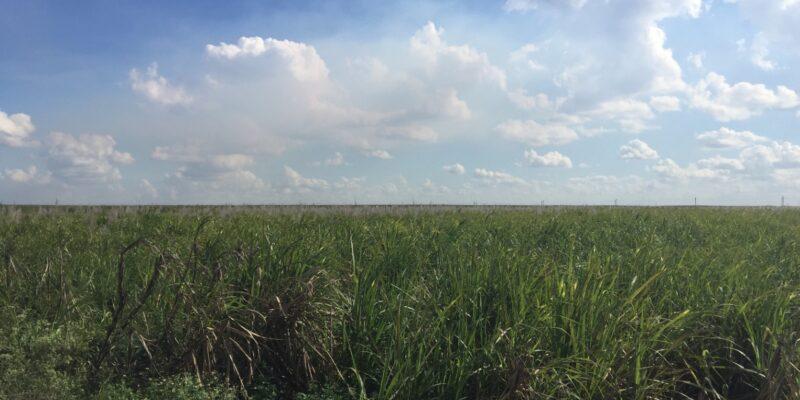 Last Summer's Blue-Green Algae Bloom Was Florida's Cuyahoga River Burning Moment