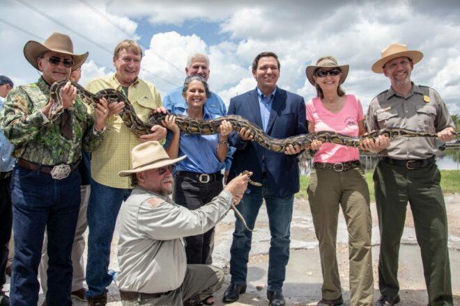 DeSantis moves to wipe out invasive python population