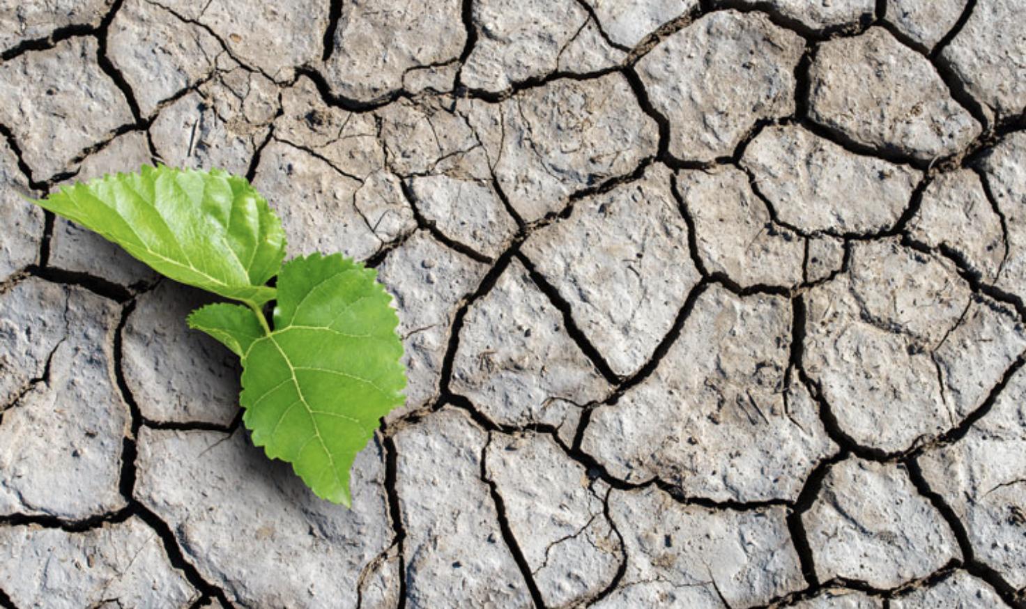 Conservative Climate Caucus Brings Common Sense Solutions
