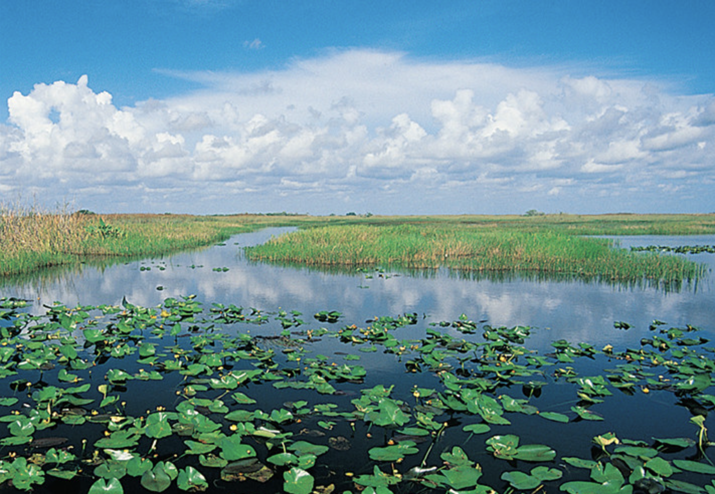 Everglades Foundation Received $566K PPP Loan After Raising $11 Million in 2020